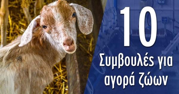 10 Συμβουλές για αγορά ζώων - του Δρ. Απόστολου Μαραντίδη Venter Προβατοτεχνική