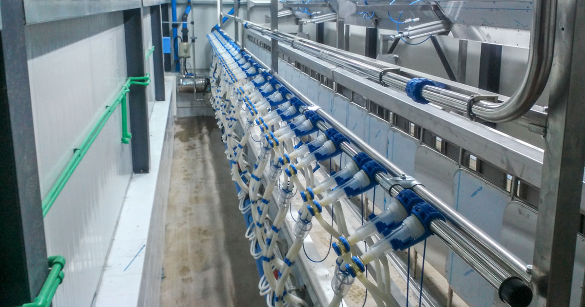 Milking System at Trifilli Grevena, Model V-7670 with Inox Animal Trap and Multiflexion System, 1×24/24.